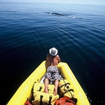 Private Whale Watching (for 4+) Product Image