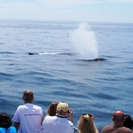 Newport Beach Whale Watching Product Image