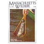 Massachusetts Wildlife - 4 Issues - 1 Year